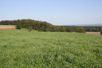 Most pastures in Pennsylvania consist of grasses interspersed with legumes and forbs or weeds.