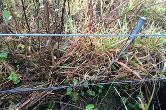 Electric fences should be grounded using a minimum of three six foot long galvanized ground rods.