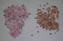 Protein supplements such as cottonseed (left) or roasted soybeans (right) can be used to increase the protein level in a grain ration.