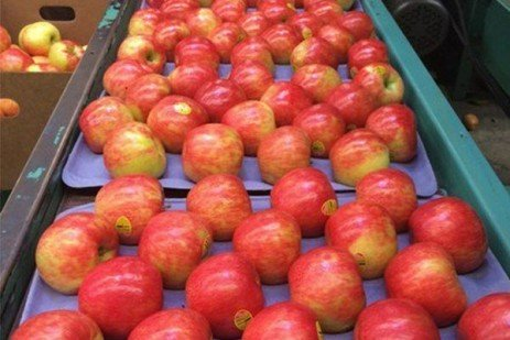 Fruit Color - Promoting Red Color Development in Apple