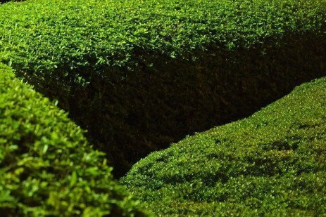 Boxwoods for Pennsylvania Landscapes