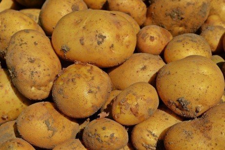 Growing Potatoes Using Plasticulture