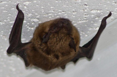 Timing for Excluding Bats