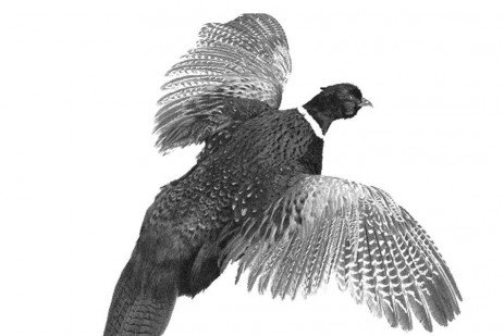 Proper Care and Handling of Game Birds from Field to Table