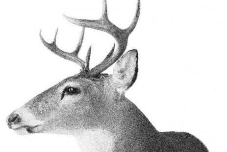 Proper Care and Handling of Venison from Field to Table