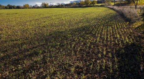 Topdressing Wheat with Nitrogen