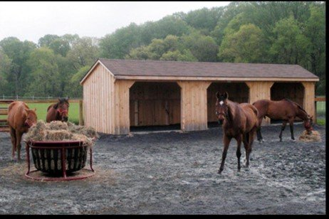 Horse Wet Weather Woes