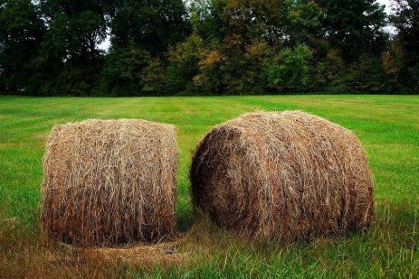 Forage Quality in Perspective