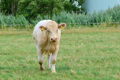 The Benefits of Managed Grazing Systems