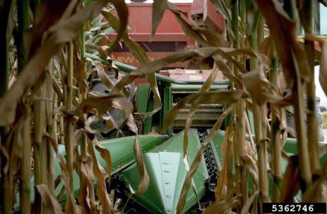 Corn Silage Dry Down Report – Options for Dry Corn