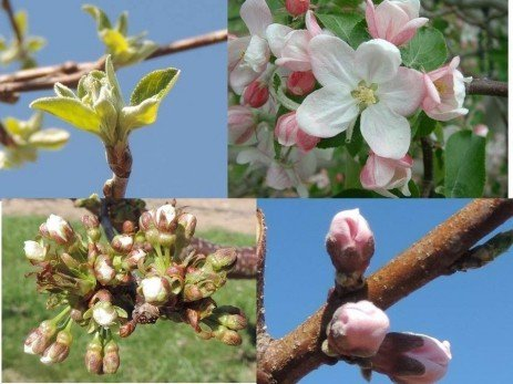 Orchard Frost - Critical Temperatures for Various Fruits