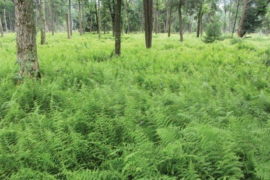 Herbicides and Forest Vegetation Management