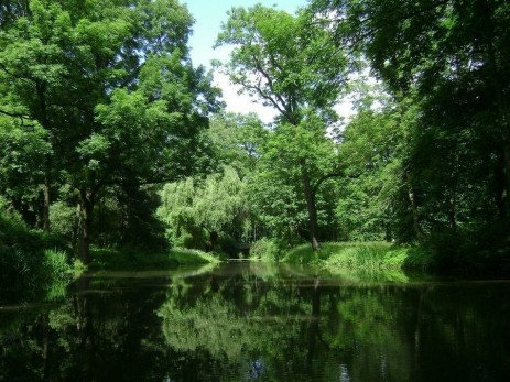 Interpreting Water Tests for Ponds and Lakes