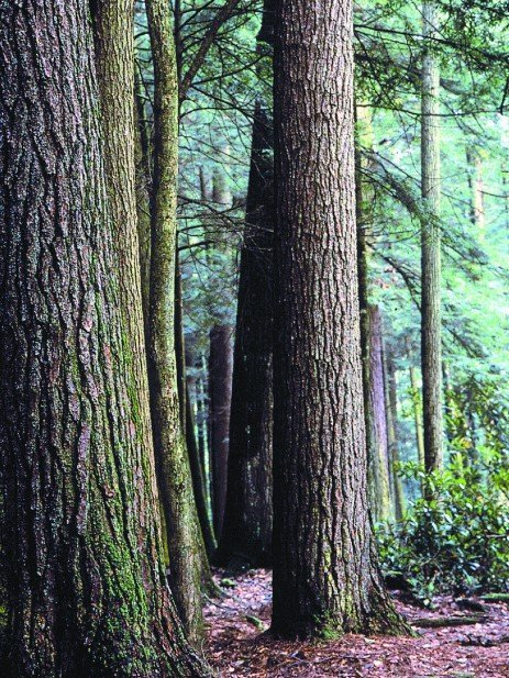 Forest Biodiversity: Understanding Biological Health in Our Forests