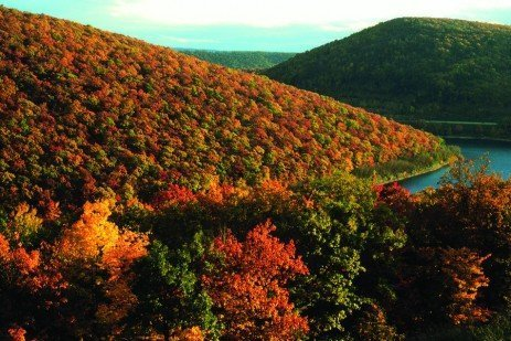 From the Woods: Forest Stewardship