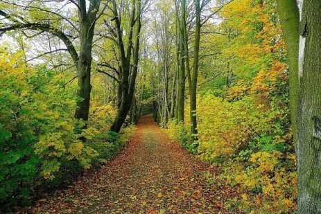 Forest Stewardship: Best Management Practices for Pennsylvania Forests