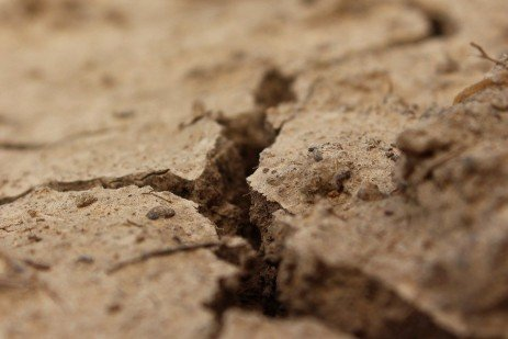 Soil Crusting and Reduced Emergence