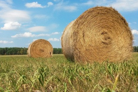 Considerations for Double-cropping Corn Following Hay in Pennsylvania