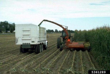Corn Silage Dry Down – Dry Weather Hastens Moisture Loss