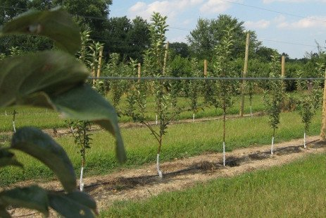 Beginning Grower: Planning and Planting an Orchard