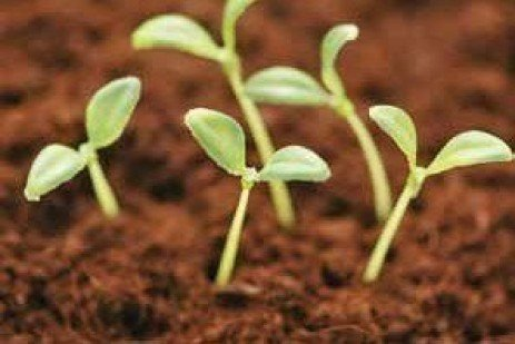 Seed and Seedling Biology