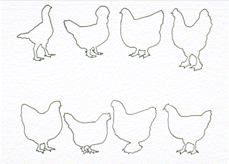 Fowl Breeds and Varieties