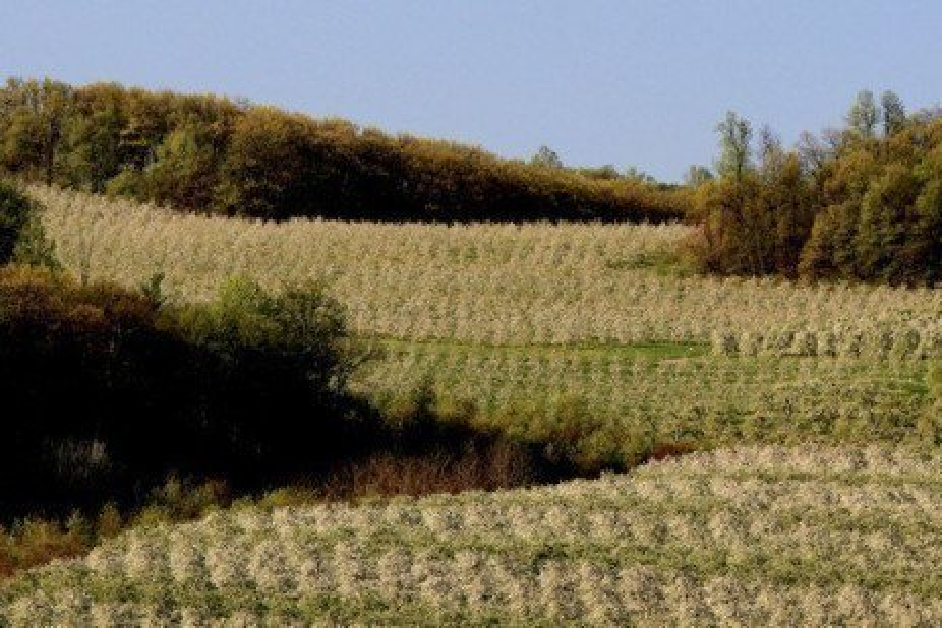 Tree Fruit Disease Toolbox - Fungicide Resistance Management