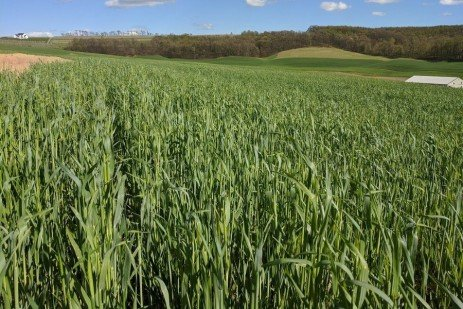 This Isn't Your Father's Cereal Rye