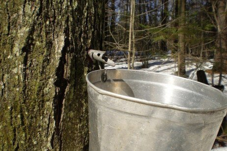 Maple Syrup Production