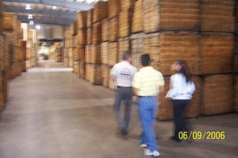 Survival of the Fittest in the Wood Products Industry