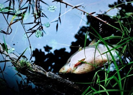 Common Causes of Fish Kills in Ponds