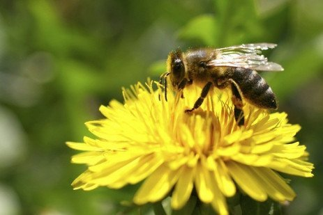 Best Management Practices for Bee Health