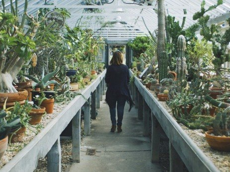 Assessing the Risk of Disease in Greenhouses