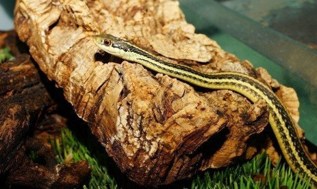 Questions on Snakes