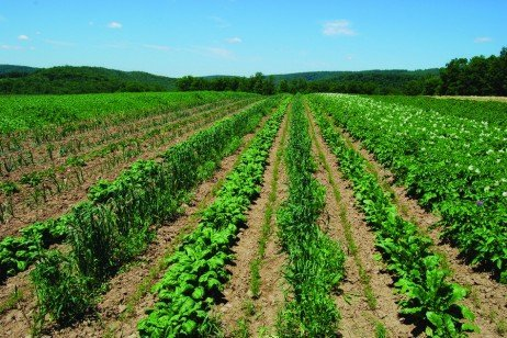 Introduction to Organic Farming: A Growing Opportunity for Pennsylvania Farmers