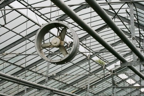 Sources Of Plant Disease In Greenhouses