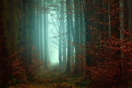 Best Management Practices For Pennsylvania Forests