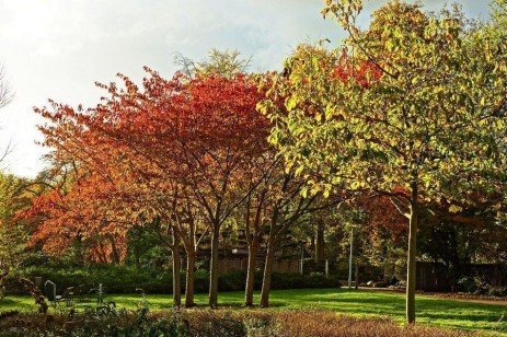 A Guide to Preserving Trees in Development Projects