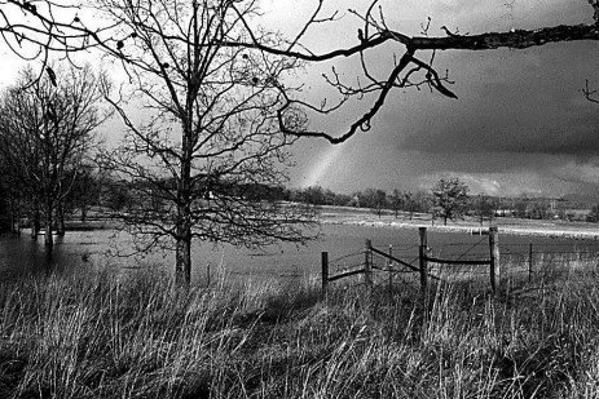 Managing Your Restored Wetland
