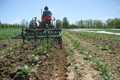 Creating a Weed Management Plan for Your Organic Farm