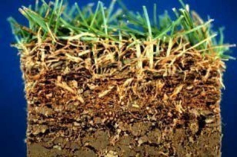 Managing Thatch in Lawns