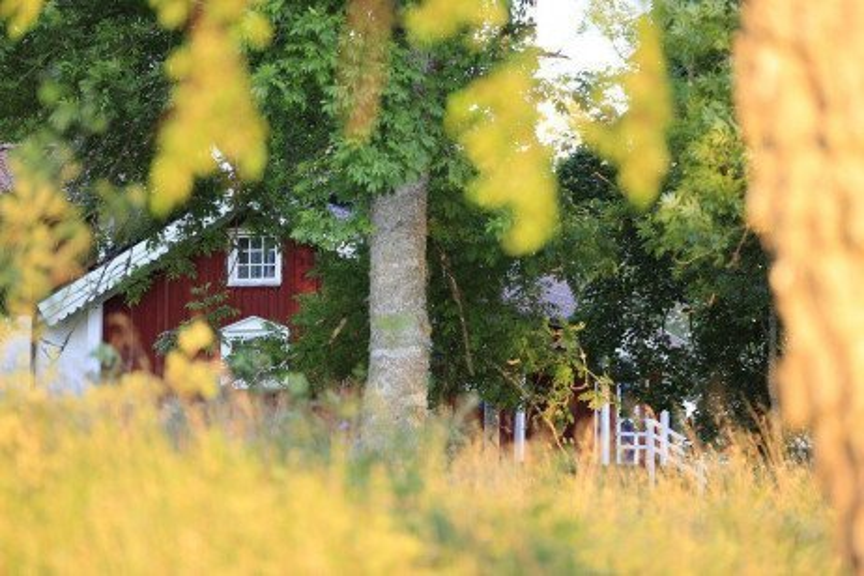 Forest Stewardship: Backyard Trees