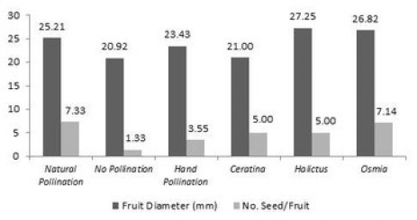 Orchard Pollination - The Role of Pollen Bees