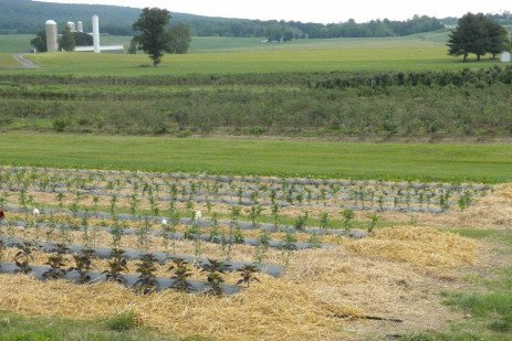 Weed Control in Cut Flowers