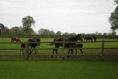 Grazing Systems for Livestock and Horses