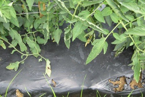 Simple Guide to Plastic Mulch and Alternatives