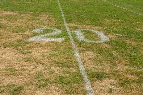 How to Repair and Restore Grass Destroyed by Insects