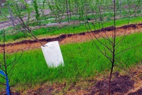 Models for the Future Apple Plots: Planting of Trees following Bio-remediation