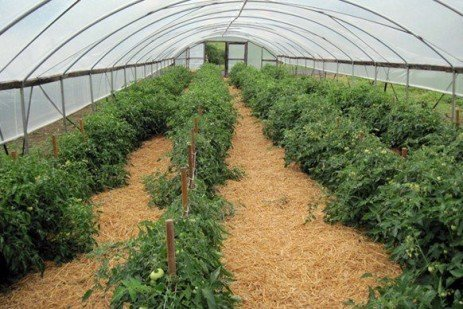 High Tunnel Study: Growers Unaware of Water Quality Issues