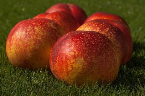 Home Orchard: Table 2.3. Pesticide Application Amounts